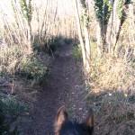 Chemin de balade